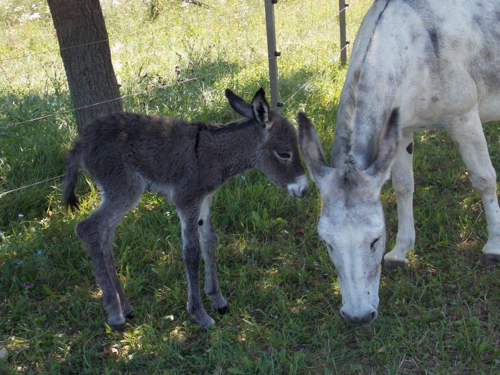 Egy kiscsacsi születése