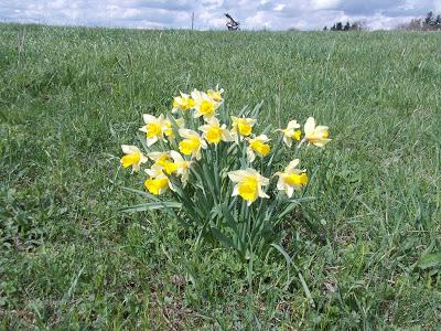 Itt a tavasz, mondhatnám…